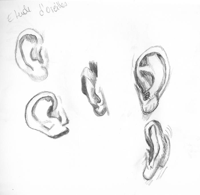 étude d'oreilles