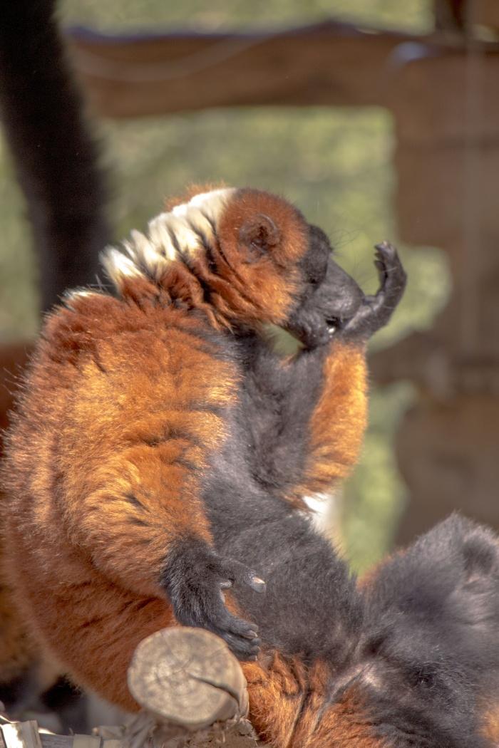 Photos animalières
